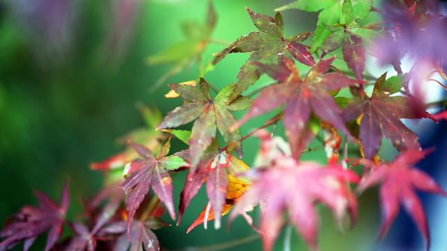 Colores de Japón : Fotografía