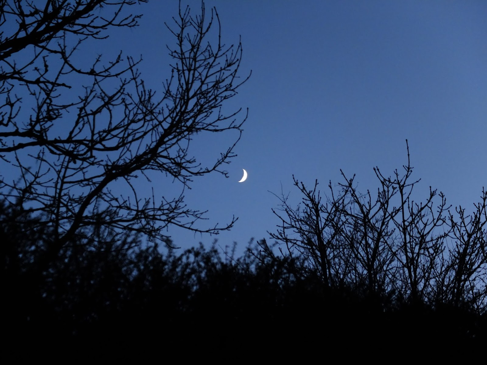 A crescent moon between bare tree branches in the mountains.