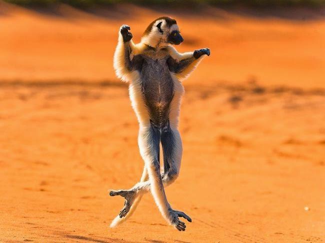 صورة سنجاب يرقص