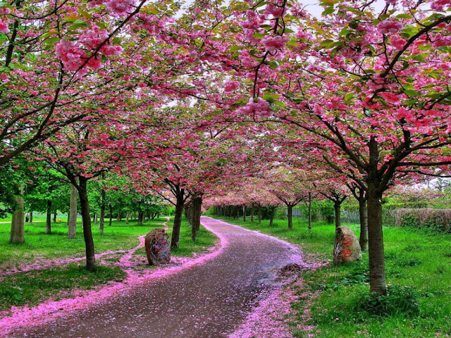 http://3.bp.blogspot.com/-HfslwbpTQ2I/TzoQrerdnhI/AAAAAAAAEus/UUimIu6-DM8/s1600/beautiful-nature-wallpapers-7.jpg