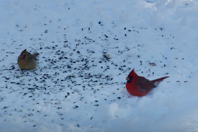 Winter: cardinal pair