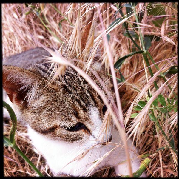 cute kitten spain