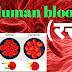 blood cell (रक्त कोशिकाए)  general science in hindi