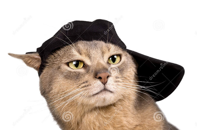 cat and cap