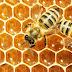 Ανακοίνωση που αφορορά τους μελισσοκόμους που δραστηριοποιούνται στην Περιφέρεια Στερεάς Ελλάδας
