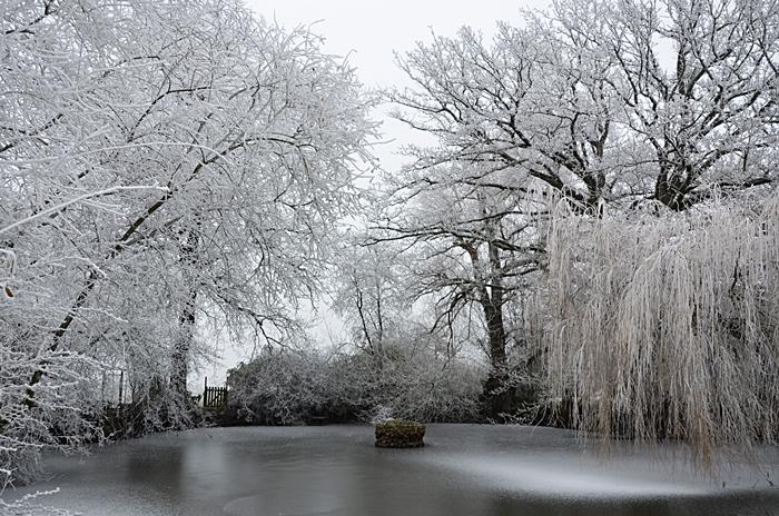 mare et arbres gelés