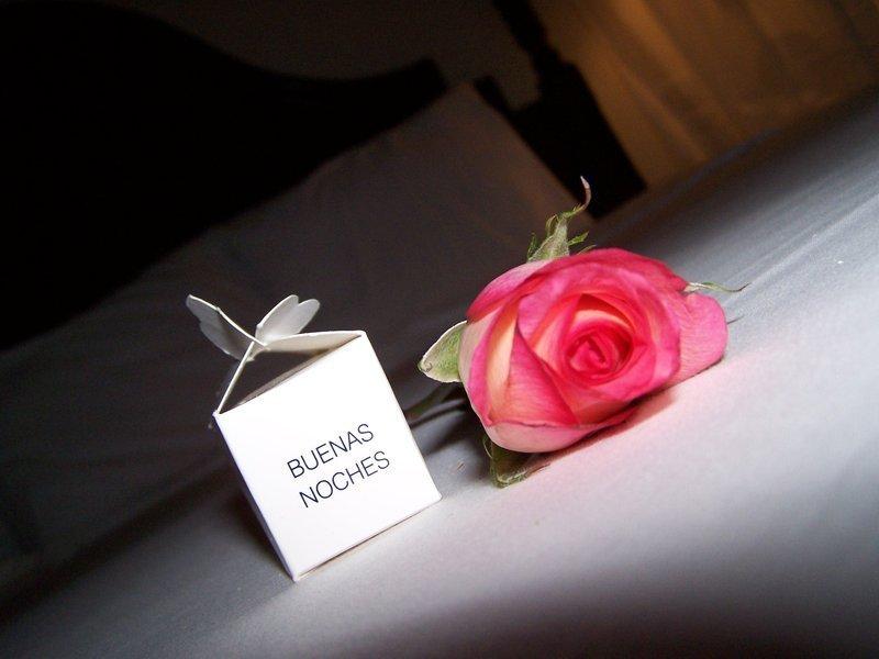 rosa de buenas noches