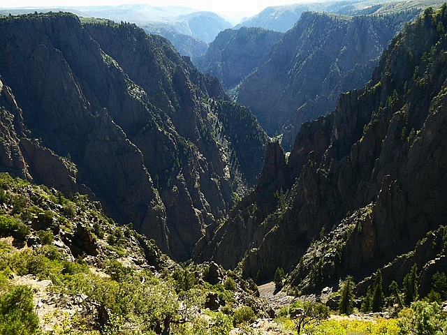 Forest at Black Canyon Of Gunnison National Park