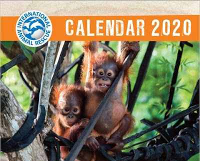 International Animal Rescue calendar for 2020, with a photo of orangutans