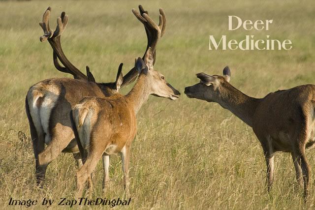 Deer Power Animal Symbol Of Gentleness Unconditional Love And