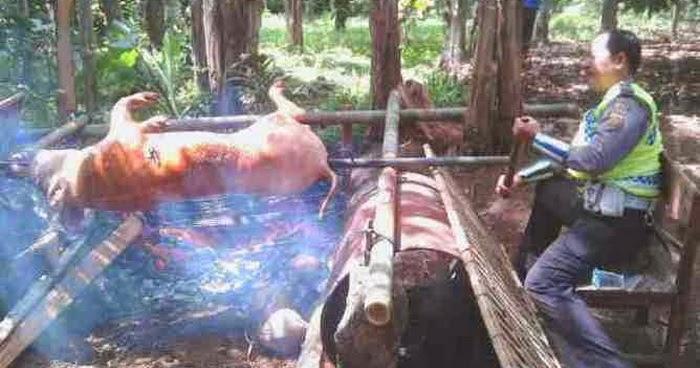 Foto Babi Di Potong 14 Tukang Potong Babi Dan 11 Dokter Hewan Disiagakan Di Denpasar Kabarnusa Com