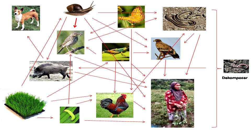 Ekosistem Pekarangan Desa dan Talun | Biologi asyik feat Fkip