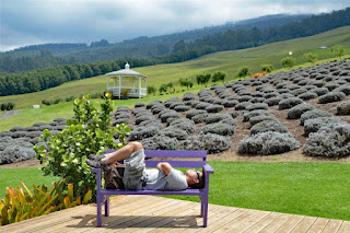Upcountry Lavender farm provided by Save on Maui