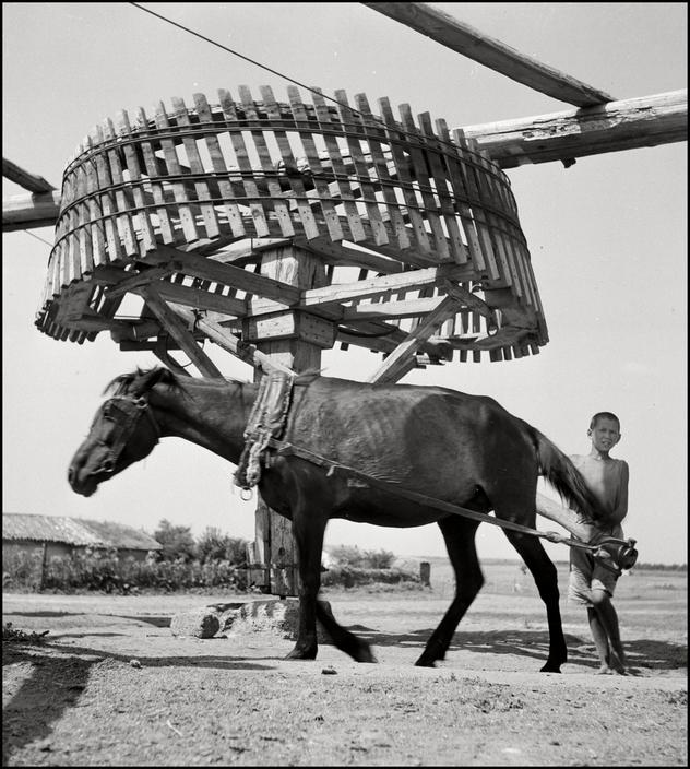Лошадь качает воду с глубины 100 метров в крымских степях, 1943 год