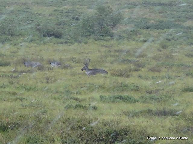 denali_national_park_and_preserve_alaska