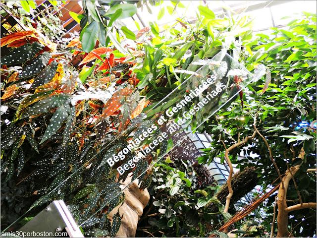 Jardín Botánico de Montreal: Invernadero de las Begonias and Gesneriacea