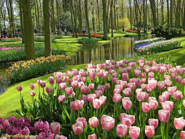 Kesejukan Nusantara Flower Garden