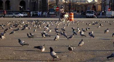 Tarif Servis Burung Stres Kembali Berkicau di Bengkel Burung TARIF SERVIS Burung Stres Kembali Berkicau di Bengkel Burung