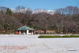 雪の芝生広場の写真