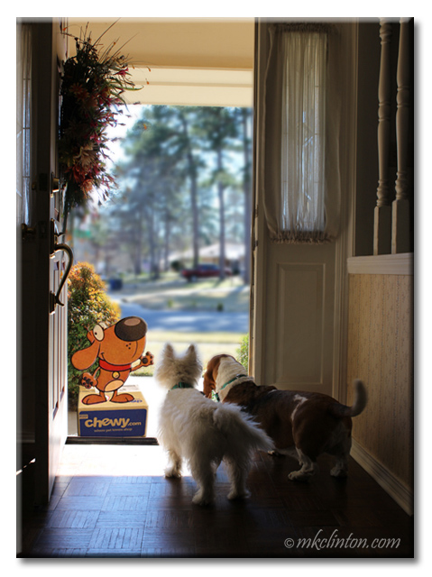 Pierre Westie and Bentley Basset Hound greet the Chewy mascot at the front door.