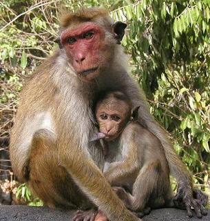 Not Again!!! Monkeys swallow N70m belonging to Northern Senators Forum.