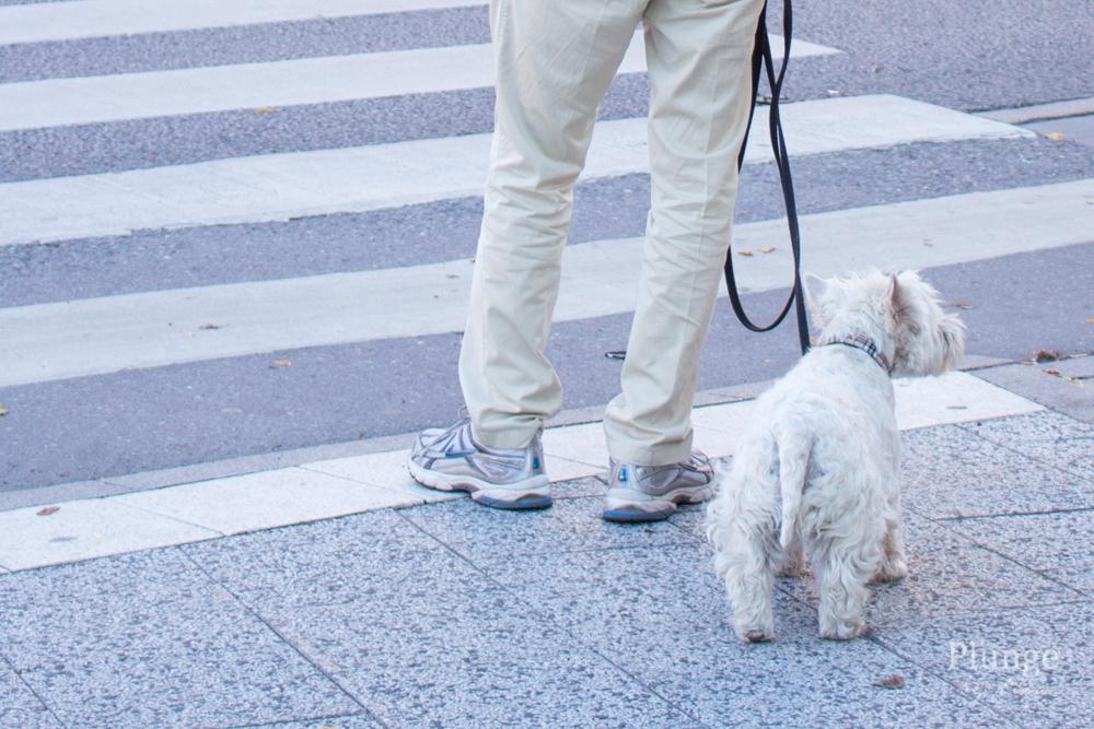 Hund i Stockholm