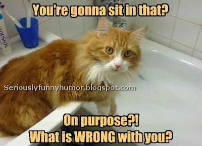 Cat in awe - You're gonna sit in the bathtub? On purpose? What is WRONG with you?!