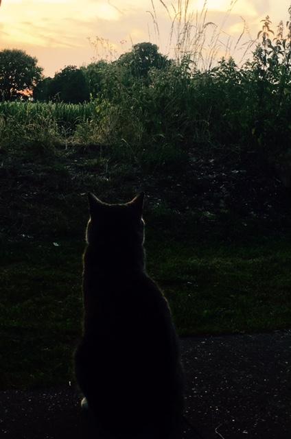 cat admiring sunset from English  garden