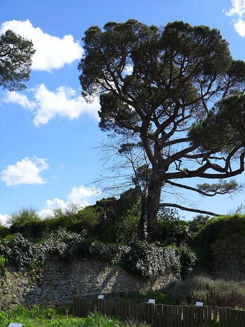 un arbre et des ruines