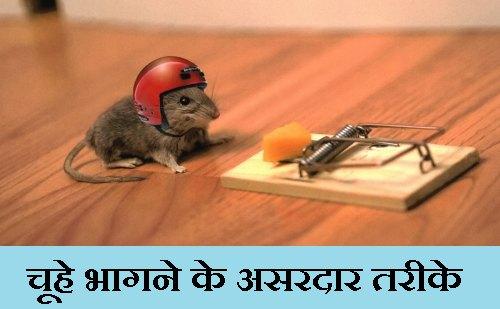 चूहे भगाने का तरीका