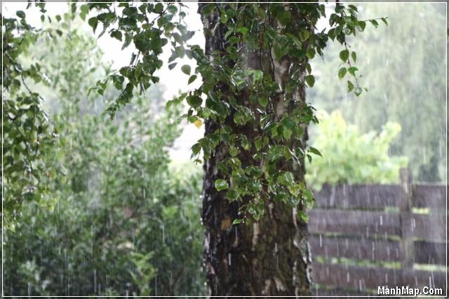 mưa rơi không ngớt