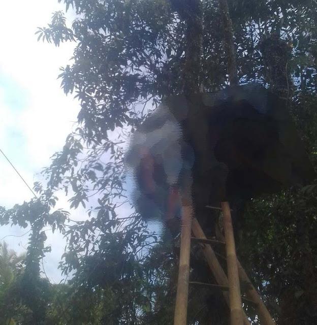 Warga Petanahan Tewas Kesetrum Saat Memangkas Pohon
