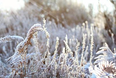 Wahner Heide im Winter www.stempeleinfach.de