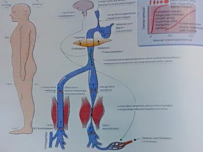 Gambar Anatomi Fisiologi Sistem Fungsional Sel