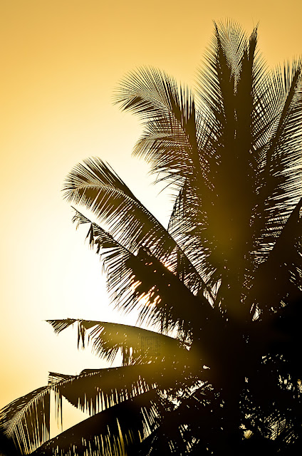 Sunrise: Coconut Leaf Silhouette