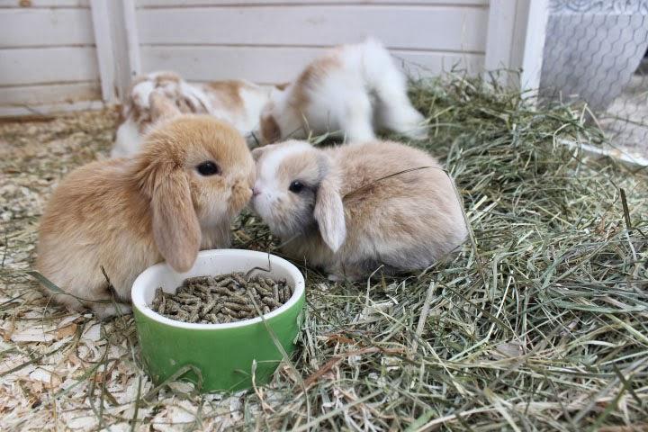 Zwergwidder04.jpg (720×480) Cute animals, Rabbit life