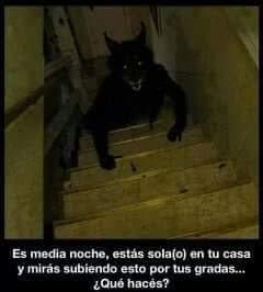 Es medianoche, estás solo en tu casa, y ves subiendo esto por la escalera, qué harías ?