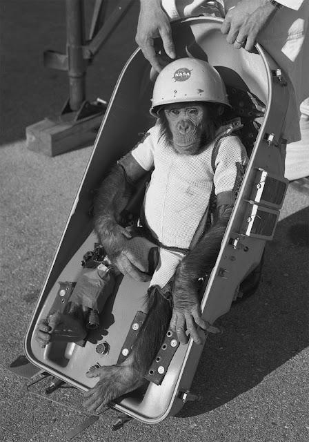 Ham Chimpanzé que foi pro espaço