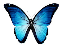 The butterfly effect constrains long term planning of enterprise architecture management