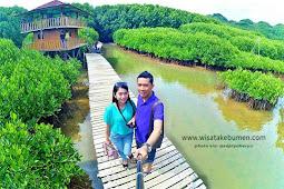 Keren!!! Hutan Mangrove Ayah Kebumen, Hijau dan Asri