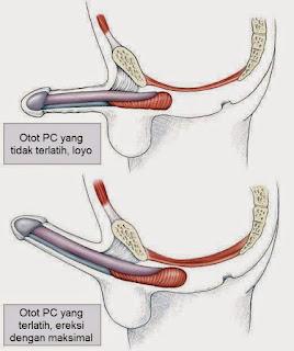 Cara Memperkeras Penis