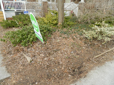 A Toronto Front Yard Spring Cleanup in Riverdale Before by Paul Jung Gardening Services--a Toronto Organic Gardener