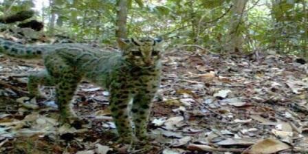 Banyak Destinasi Wisata Menarik di Taman Nasional Bukit Tigapuluh