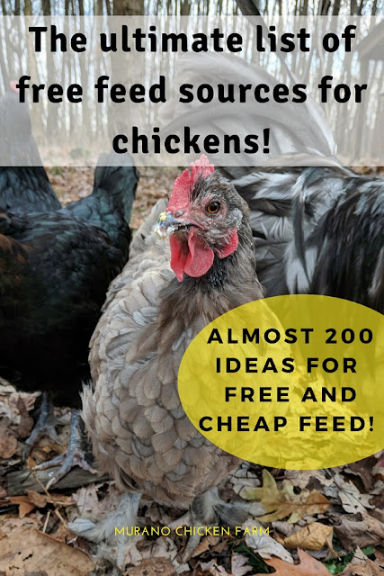 Frugal chicken feed options. How to feed your chickens cheaply (or free!)