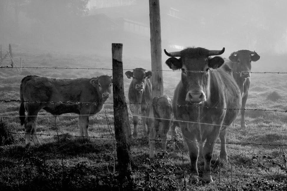 fotografía de animailes en blanco y negro, imágenes, fotos creativas, artística,