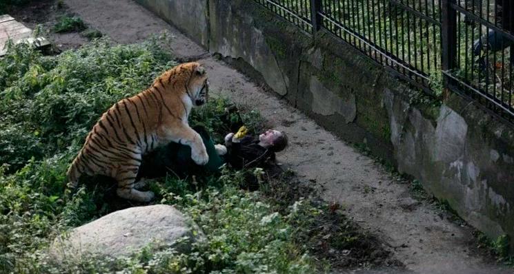 harimau siberia serang wanita