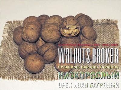 Семена грецкого ореха Иван Багряный, 0985674877, 0957351986, Walnuts Broker