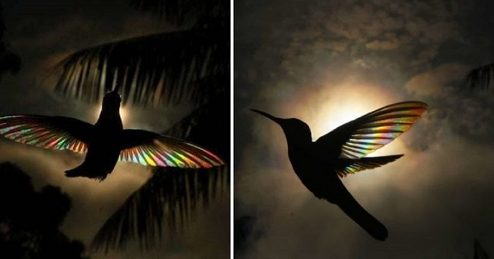 Breathtaking Photos Of Shining Hummingbirds
