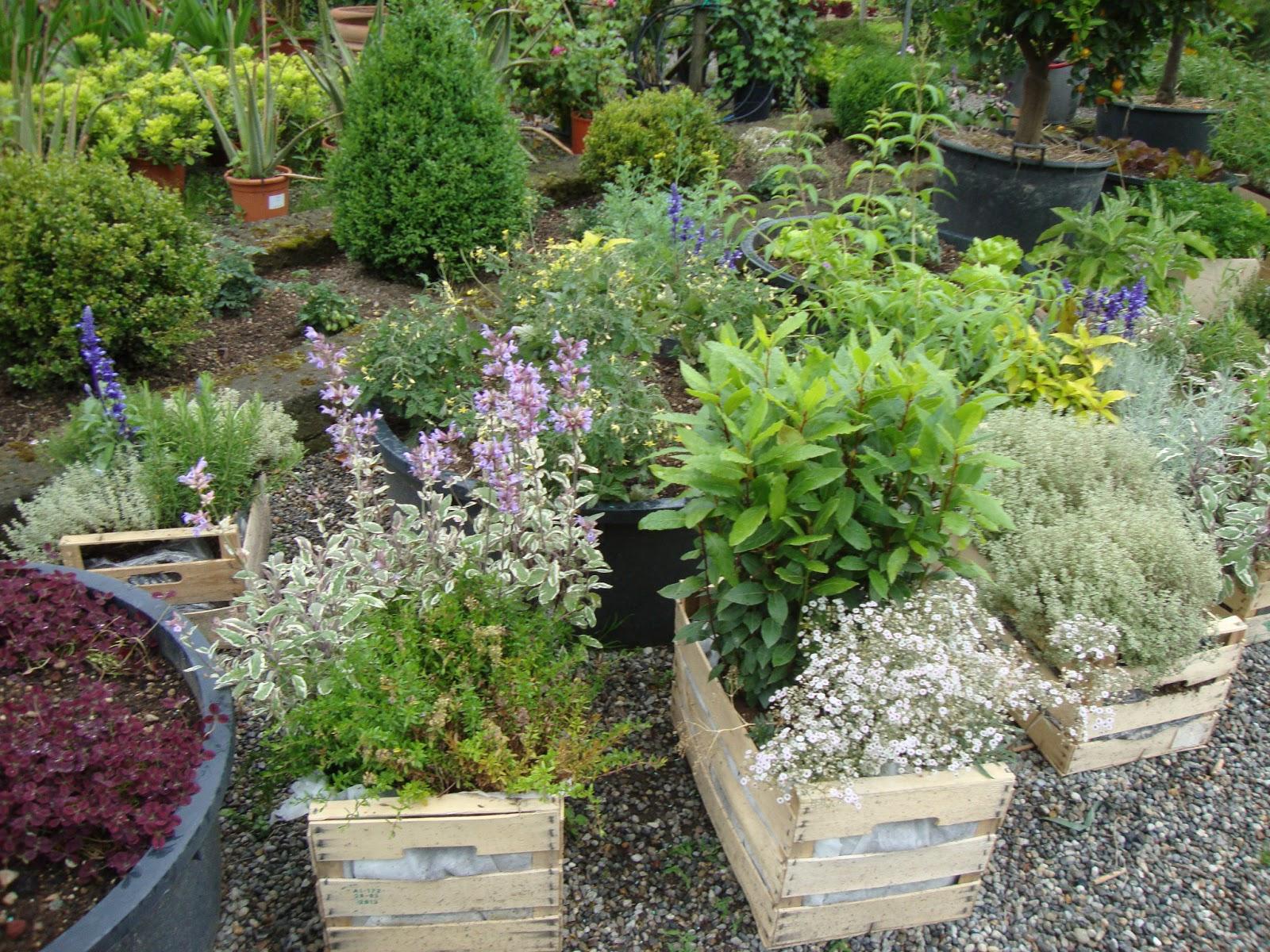 Exceptionnel Un piccolo giardino in città: Coltivare i fiori insieme agli  CF92