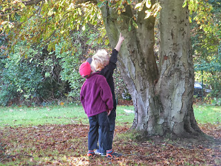 chasing a squirrel up a conker tree
